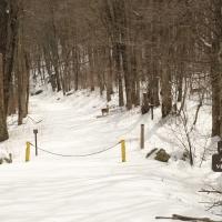winter snow fire road deer shenandoah national park